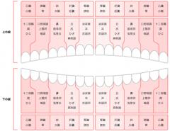 歯ぐきアロママッサージ